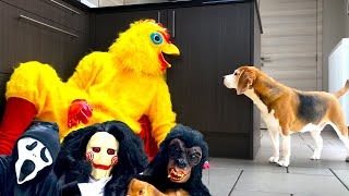 Funny Beagles Get Pranked With Scary Halloween Costumes