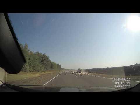 Оторвало прицеп с курами на трассе Тихорецк-Сальск