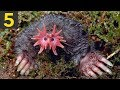 Top 5 Most Deadly Creatures