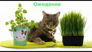 Приколы про кошек 2018. ожидание - реальность.
