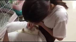 Breast feeding and lactagogue tutorial for rabbit