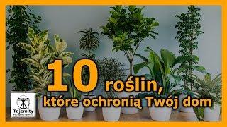10 roślin, które ochronią Twój dom.