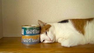 猫缶を夢に見る猫 早く猫缶よこせ!!! Cat Dream Canned Cat Food Constantly, Give Me Canned Cat Food Early!!!