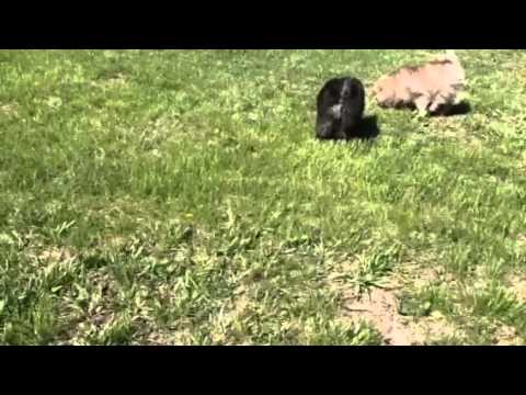 Bumper playing in the yard