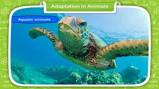 Adaptation In Animals Class-4
