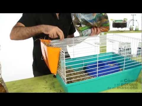 COBAYAS, CUYOS - Preparación de la jaula para la cobaya (Parte 1)