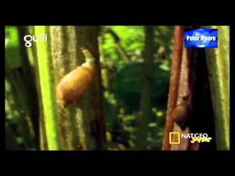 Les parasites et les maladies du bois