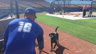 Professional Baseball player gives dog training a try!