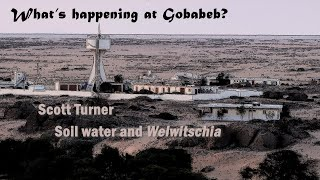 2 minute Gobabeb. Water relations of Welwitschia mirabilis