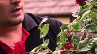 Frank Van Etten  Dans Laila Dans Officiële Videoclip