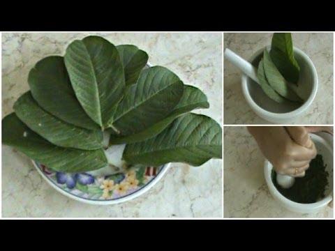 Video Cara Menghilangkan Jerawat dengan Cepat Secara Alami dengan Herbal Daun Jambu Biji