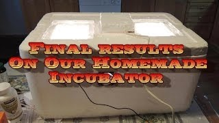 Final Results From The Homemade Incubator