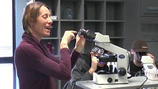 Viewing specimens using the Compound Microscope