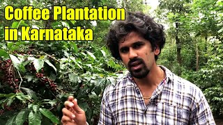 How Coffee is Grown | Coffee Cultivation | Hassan Coffee Plantation | Agriculture | Kannada Vlog