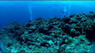 Подводный мир 360° с RICOH THETA V