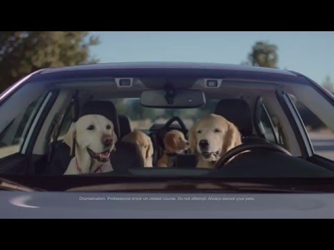 Subaru Dog Tested | Subaru Commercial | Phone Navigation