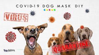 How to Make N95 Dog Mask