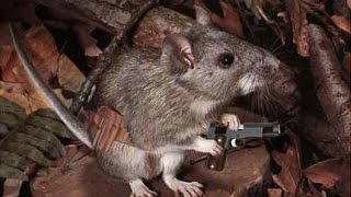 Mouse Guns For Concealed Carry!?!?