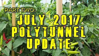 Chilli Polytunnel Vlog Update July 2017
