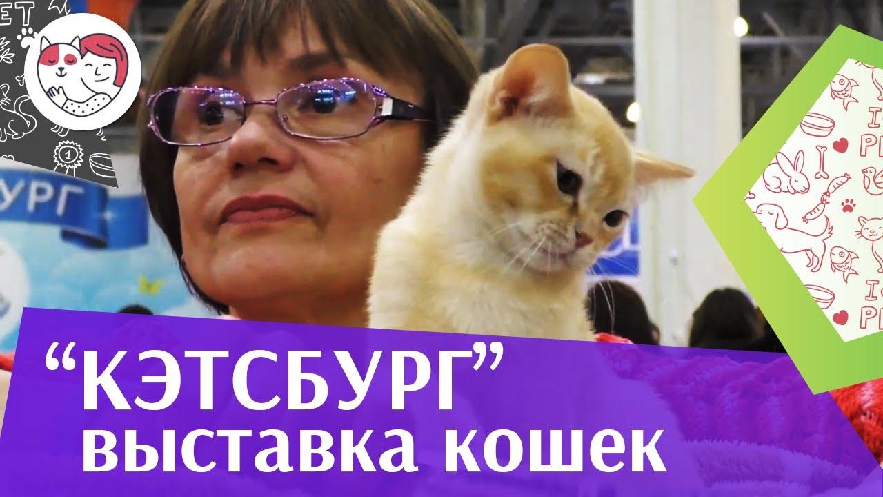 Международная выставка кошек «Кэтсбург» на ilikepet