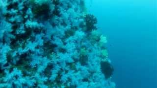 preview picture of video 'Scuba Diving at Fiji's White Wall'