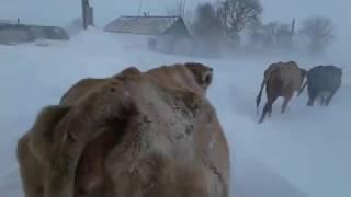 СНЕЖНАЯ ЗИМА В КАЗАХСТАНЕ