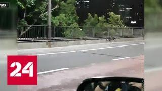 Австралийские полицейские поймали кенгуру, мешавшего дорожному движению - Россия 24