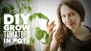 Tomatoes: Growing Indoor Tomatoes Year Round - on How to Grow a Garden with Scarlett