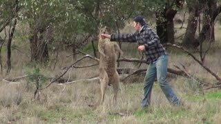 Why The Man Who Punched Kangaroo to Save His Dog Faces Backlash in Australia