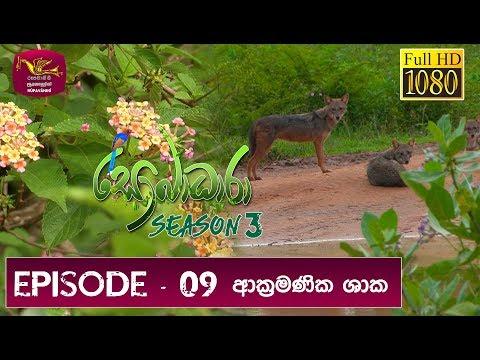 Sobadhara Rupavahini | 2019-05-10 | Invasive Plants in Sri Lanka