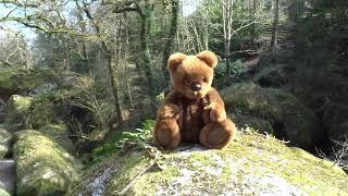 Un ours découvre une forêt légendaire