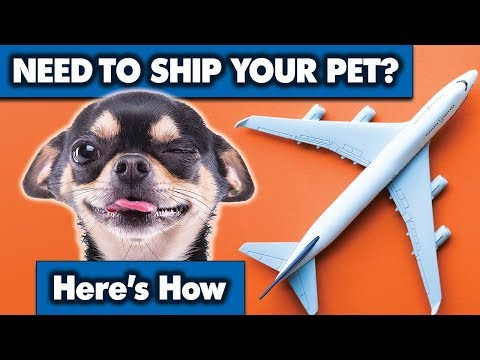 , title : 'Shipping your pet is easier than you think   Sweetie Pie Pets by Kelly Swift