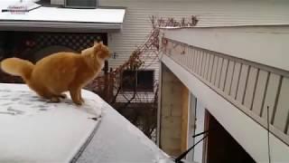 Приколы с котами № 17. Смешные коты. Приколы 2018.  Канал улыбок