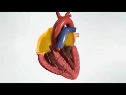Hipertenzija liječenje bradikardija