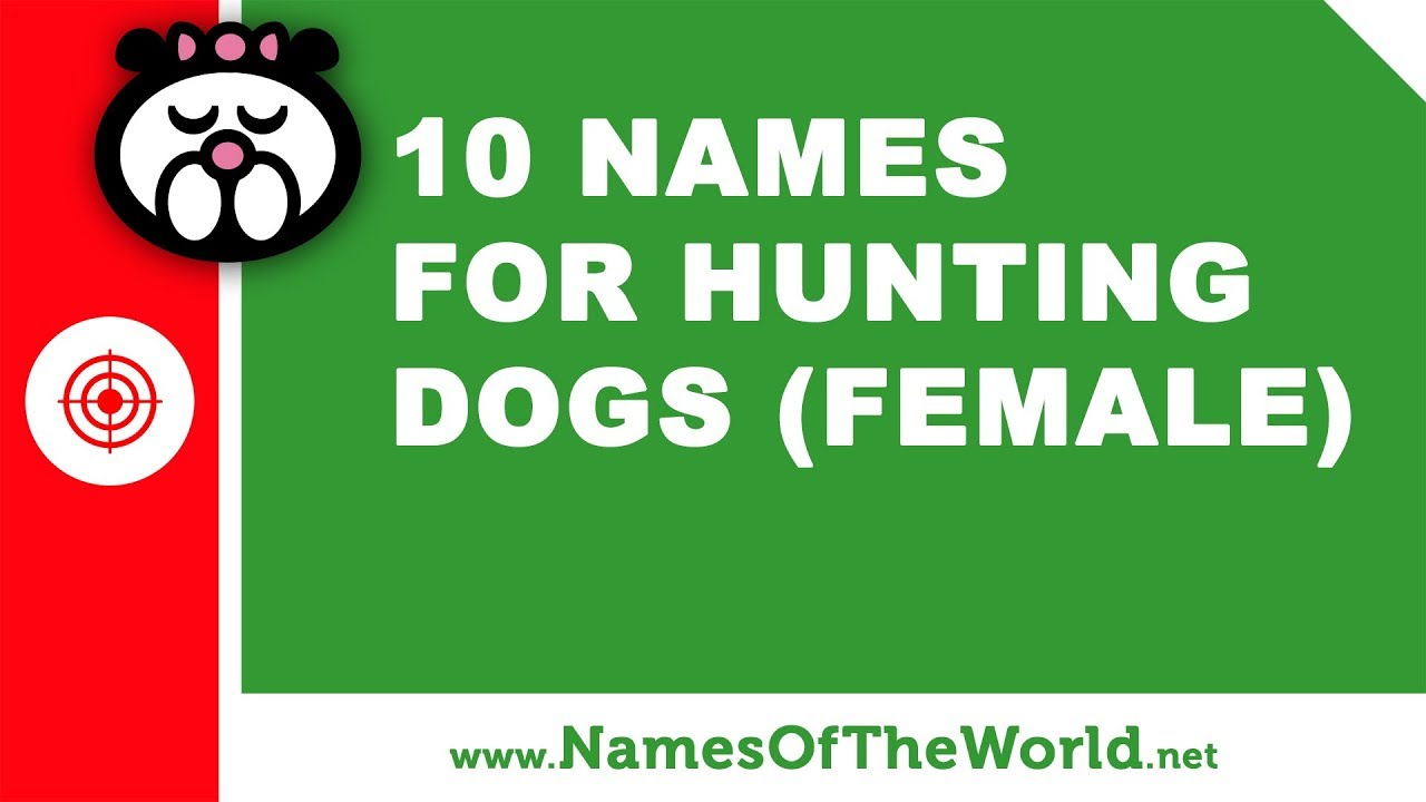 10 names for hunting dogs (female) -  the best pet names - www.namesoftheworld.net