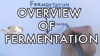 Overview of Fermentation | Lactic Acid & Alcoholic Fermentation