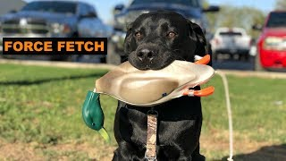 Training My DUCK DOG | PT. 11