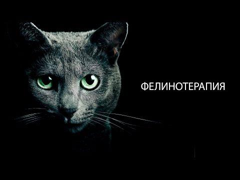 Фелинотерапия. Лечение кошками. Механизм действия.