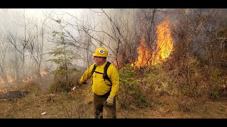 Wildfire and INW Forest Management