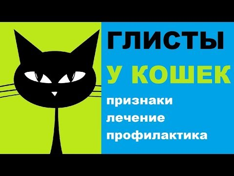 Признаки глистов у кошек, лечение, профилактика