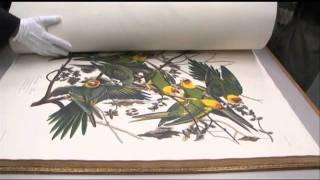 Audubon's Birds of America book