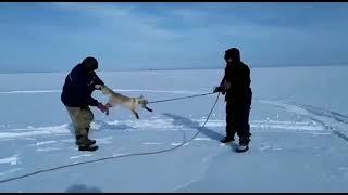 Приколы на охоте и рыбалке  Топовые видосы №5