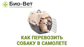 Как Перевозить Собаку В Самолете / Правила Перелета В Самолете С Собакой / Ветклиника Био-Вет