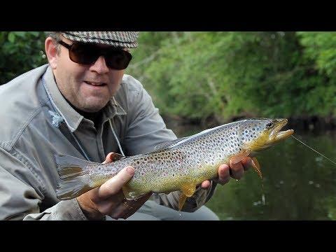 Small Stream - Big Trout