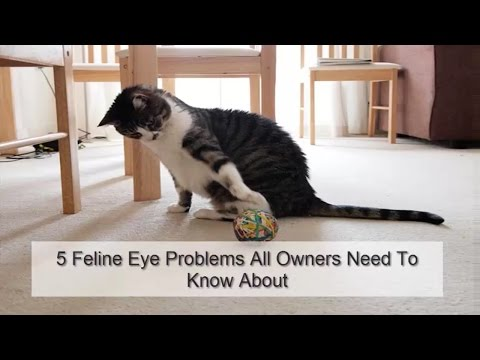 5 Feline Eye Problems All Owners Need To Know About