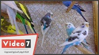 تعرف على كيفية تربية طيور الزينة في الصيف والشتاء تحميل MP3