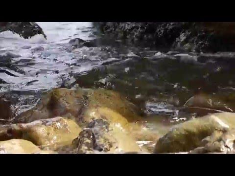 Скачать шум Черного моря бесплатно