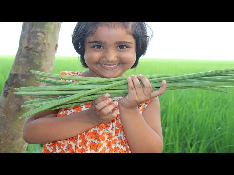 FARM FRESH Drumstick Recipe Cooking By 5 Years Kid Healthy & Tasty Drumstick Curry Village Food
