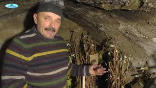 Хранение виноградных чубуков зимой. Болгарский способ.