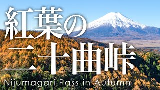 絶景 空撮 二重曲峠の紅葉 - Aerial view of Nijumagari Pass in Autumn taken with ad drone